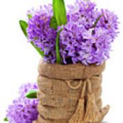 Beautiful Hyacinths Poster