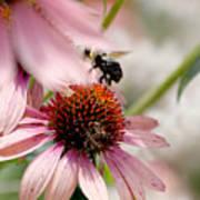 Bee Leaving Flower Poster