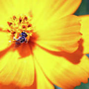 Bee Orange Poster