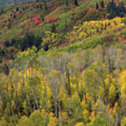 Big Cottonwood Canyon Fall Colors Poster