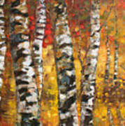 Birch Trees In Golden Fall Poster