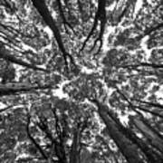 Black And White Nature Detail Poster