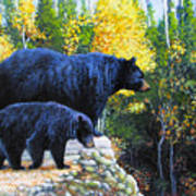 Black Bear And Cub Poster