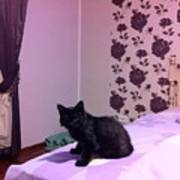 Black Cat Poster