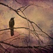 Blackbird 2 Poster