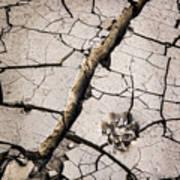 Blair Cracked Mud 1685 Poster