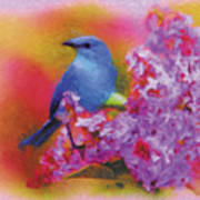 Blue Bird In The Lilac's Poster