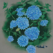 Blue Hibiscus Poster