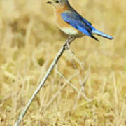 Bluebird In February Poster