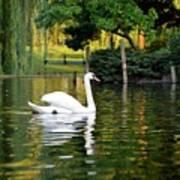 Boston Public Garden Swan Green Reflection Poster