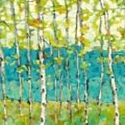 Bright Birches Poster