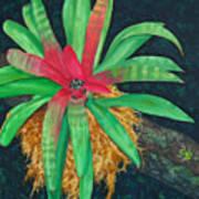 Bromeliad Poster by Charles Yates