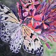 Butterfly Enchantment Poster