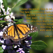 Butterfly With Scripture Poster by Linda Phelps