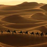 Camel Caravan In The Erg Chebbi Southern Morocco Poster