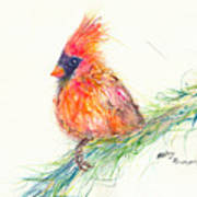 Cardinal On Branch Poster