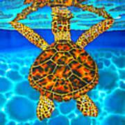 Caribbean Hawksbill Sea Turtle Poster