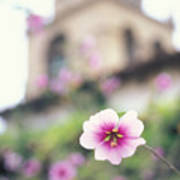 Carmel Mission With Flowers Poster
