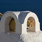 Cat On A Roof, Greece Poster