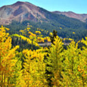 Colorado Fall Colors Poster