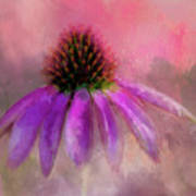 Coneflower Painted Poster