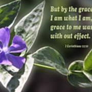 1 Corinthians 15 Vs 10 Lavender Blossom Poster