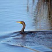 Cormorant In The Marsh Poster