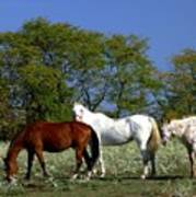 Country Horses Poster