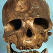 Cro-magnon Skull Poster