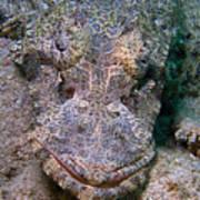 Crocodile Fish Poster by Joerg Lingnau