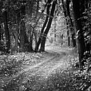 Curving Trail Entering Deciduous Forest Poster