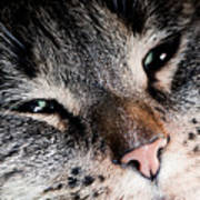Cute Cat Close-up Portrait Poster