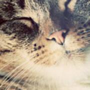 Cute Small Cat Portrait Poster