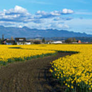 Daffodil Lane Poster