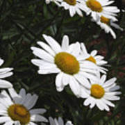 Daisy Day Poster