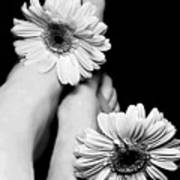 Daisy Toes Poster