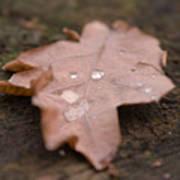 Dead Leaf Poster
