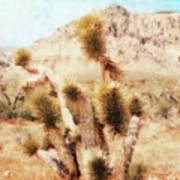 Desert Yucca Poster