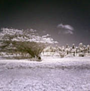 Desertic Landscape Poster