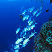 Diving Australia Poster