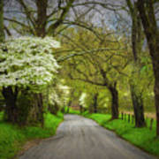 Dogwood Trail, Smoky Mountain, Tennessee Poster