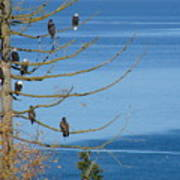 Eagle Tree By The Salish Sea Poster