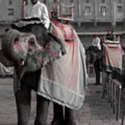 Elephant At Amber Fort Poster