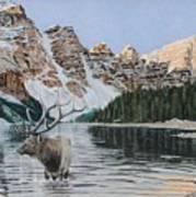 Elk In Moraine Lake Poster