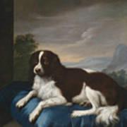 English Springer Spaniel On A Cushion Poster