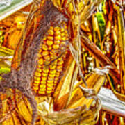Field Corn Ready For Harvest Poster