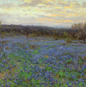Field Of Bluebonnets At Sunset Poster