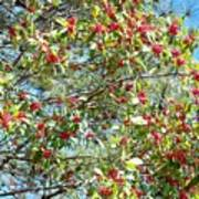 Firethorn Tree Poster