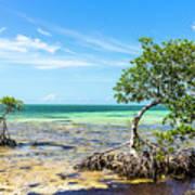 Florida Keys Mangrove Reef Poster