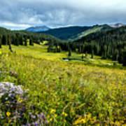 Flowering Colorado Mountain Meadow Poster